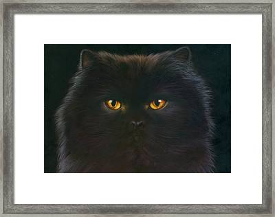 Black Persian Framed Print by Andrew Farley