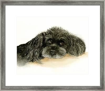 Black Poodle Dog Framed Print by Nan Wright