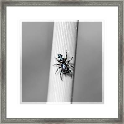 Black Spider In Black And White Framed Print by Toppart Sweden