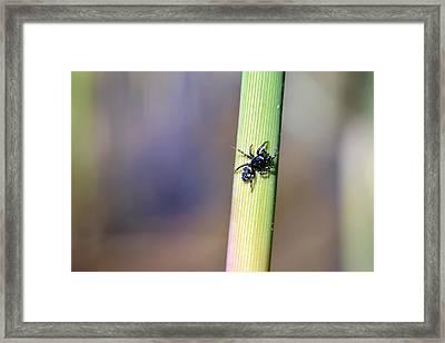 Black Spider In Reeds Framed Print by Toppart Sweden