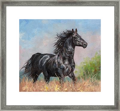 Black Stallion Framed Print by David Stribbling