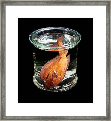 Black Surgeonfish Framed Print by Natural History Museum, London