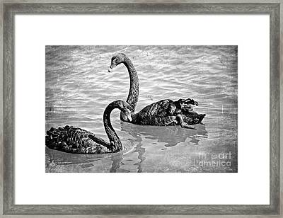 Black Swans - Black And White Textures Framed Print by Carol Groenen