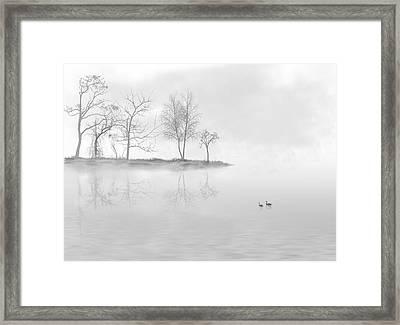 Black Swans Swimming In A Lake Framed Print by Bijan Studio