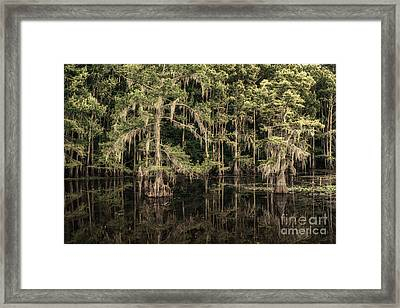 Black Water In Caddo Lake Framed Print by Tamyra Ayles
