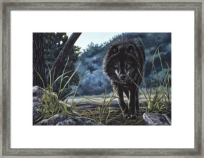 Black Wolf Hunting Framed Print by Lucie Bilodeau
