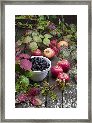 Blackberry And Apple Framed Print by Tim Gainey