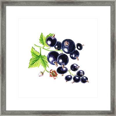 Blackcurrant Happy Berries Framed Print by Irina Sztukowski