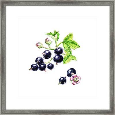 Blackcurrant Botanical Design Framed Print by Irina Sztukowski