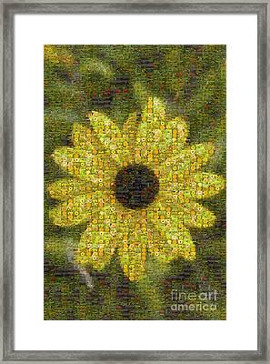 Blackeyed Suzy Mosaic Framed Print by Darleen Stry