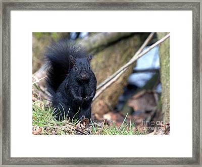 Blackie Framed Print by Sharon Talson