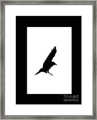 Black Crow Framed Print by Linsey Williams