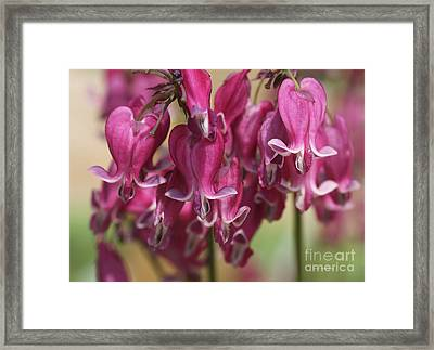 Bleeding Hearts Framed Print by Deborah Benoit