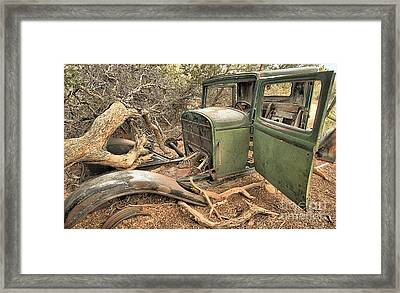 Blending In With The Trees Framed Print by Adam Jewell
