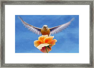 Bless  You Framed Print by Jean Noren