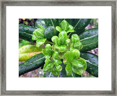 Blessed Framed Print by Anca S