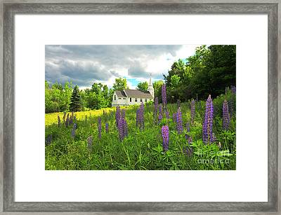 Blessed Are The Lupine Framed Print by Catherine Reusch  Daley
