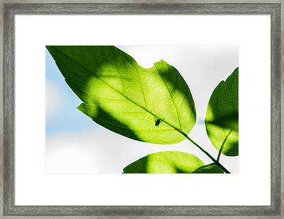 Blessed Days Of Warmth And Sun Framed Print by Alexander Senin