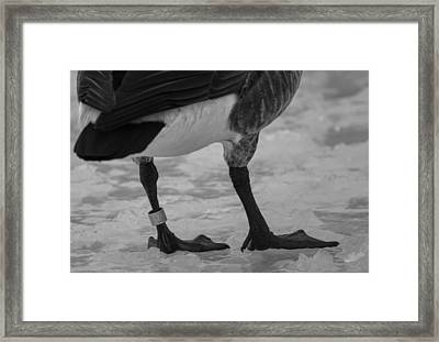 Bling Framed Print by Thomas Young