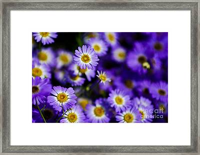 Blinking Purple Framed Print by Syed Aqueel