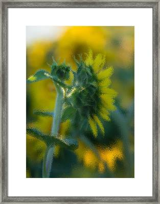Bliss For Me Framed Print by Rima Biswas