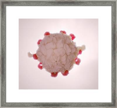 Blood Serum Protein  Framed Print by Andrzej Wojcicki