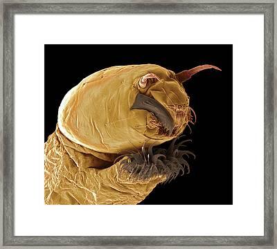 Bloodworm Head Framed Print by Steve Gschmeissner