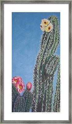 Bloomin Cactus Framed Print by Marcia Weller-Wenbert