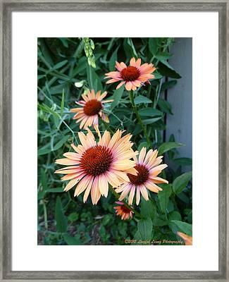 Blooming Coneheads Framed Print by Lingfai Leung