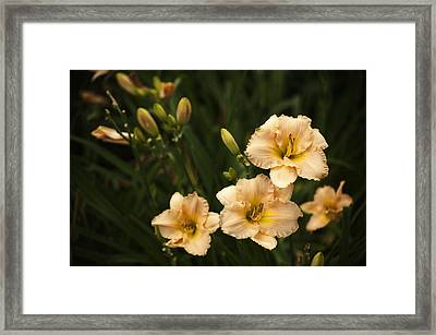 Blooming Garden Framed Print by Phyllis Peterson