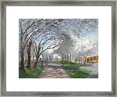 Blooming In Niagara Park Framed Print by Ylli Haruni