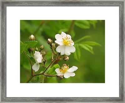 Blooming Framed Print by Lynn Berney
