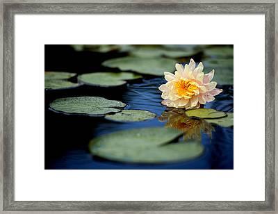 Blossom 2 Framed Print by Joey  Maganini