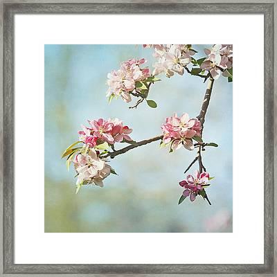 Blossom Branch Framed Print by Kim Hojnacki