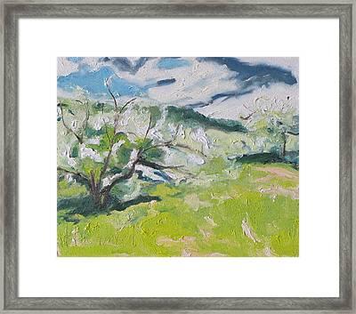 Blossom Framed Print by Francois Fournier
