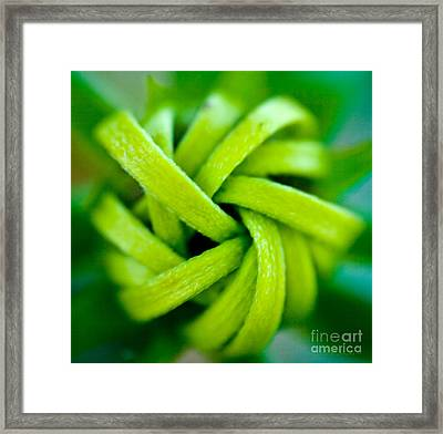 Blossom Knot Framed Print by Iris Richardson