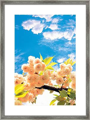 Blossoms Against Sky Framed Print by Panoramic Images