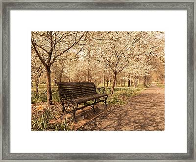 Blossoms  Framed Print by Scott Rackers