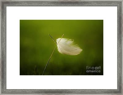 Blowin' In The Wind Framed Print by Lynda Dawson-Youngclaus