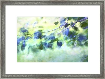 Blowin' In The Wind Framed Print by Theresa Tahara