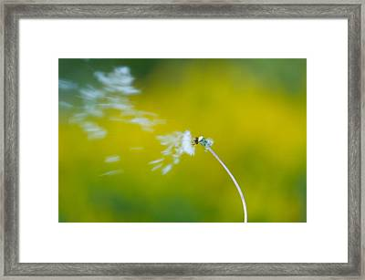 Blown Away Framed Print by Sebastian Musial
