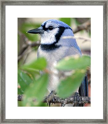 Blu L Framed Print by D C