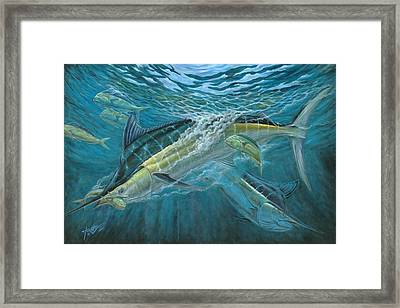 Blue And Mahi Mahi Underwater Framed Print by Terry Fox