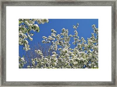 Blue And White Framed Print by Steven Stutz