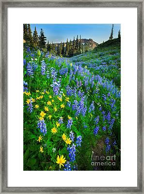 Blue And Yellow Hillside Framed Print by Inge Johnsson