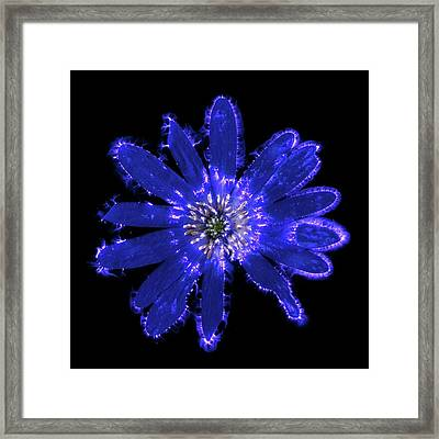 Blue Anemone Flower Framed Print by Robin Noorda