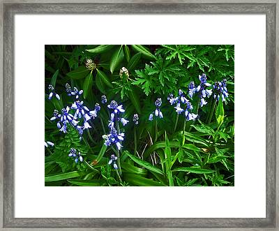 Blue Bells Framed Print by Aimee L Maher Photography and Art Visit ALMGallerydotcom
