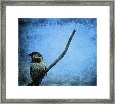 Sparrow On Blue Framed Print by Dan Sproul