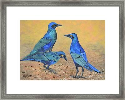 Blue Birds Of Happiness Framed Print by Caroline Street