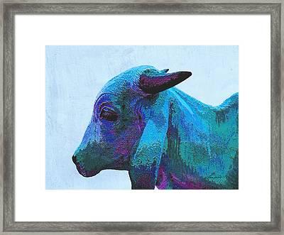 Blue Brahma Framed Print by Ann Powell